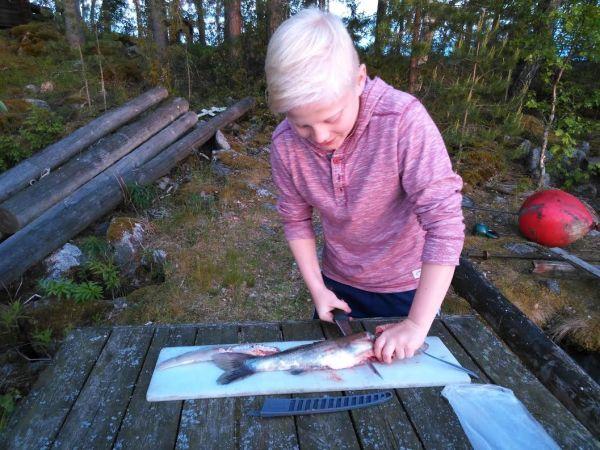 Kesäistä kalankäsittelyä